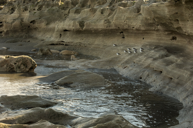 jupiter free things to do - blowing rocks preserve