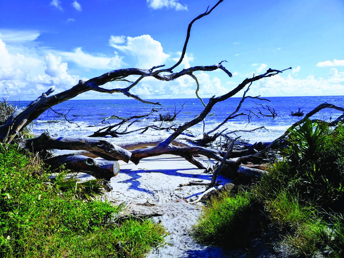 Amelia Island - Big Talbot Island